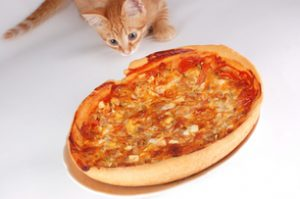 Even a finicky cat should not eat pizza!