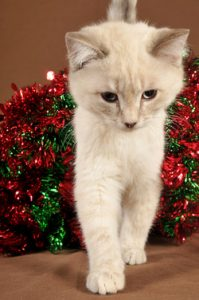 Still shopping? Here are the 20 best Christmas gifts for cat people.