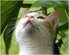 To understand cat behavior, all you have to do is think like a cat!