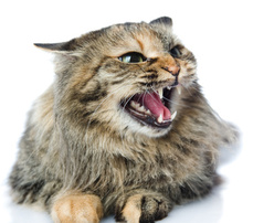 An aggressive cat can be scary and even dangerous. But there are ways for an aggressive cat and people to coexist.,