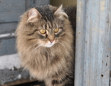 Long-Haired Cat outside