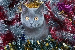 Keeping Christmas safe and fun for cats just takes some planning.