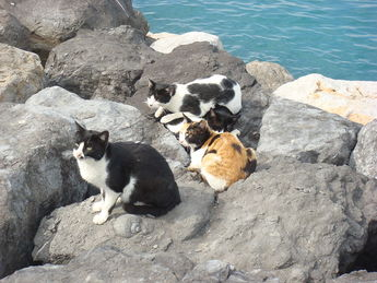 feral cats on beach