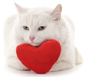 It's heart month and the perfect time to think about preventing heart disease in cats.