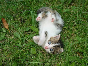 Feral kittens are happiest outside.