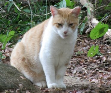 Mr. P was part of my feral cat colony.