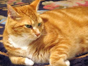 Heart disease in cats can be treated successfully.