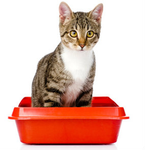 There are many reasons why cats won't use the litter box.