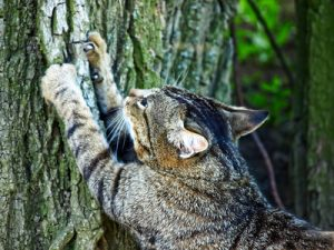 cats communicate with their claw marks and the scent glands in their paw pads.