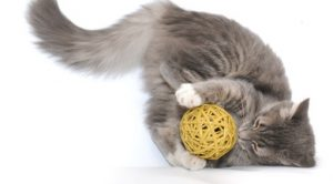 Playing together is a great way for cats and older adults to get some exercise.
