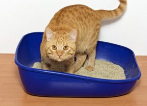 What do you do if your cat has stopped using the litter box?