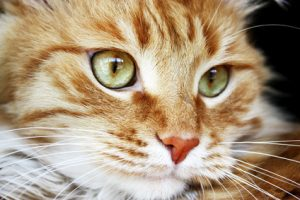 Giving a cat a pill doesn't have to cause major trauma.