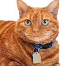 The best cat collar is easy to fit correctly and comes off when caught on something.