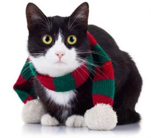 Wanting to wear a muffler is just one way changing weather affects cat behavior.