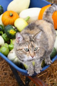 Make Thanksgiving as much fun for your cat as it is for you.