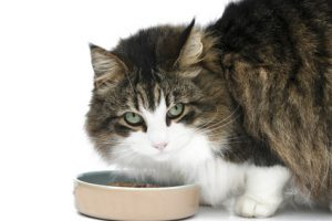 clean meat for cats: Animal protein without the animals