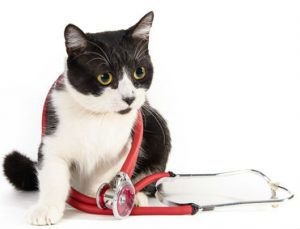 Is your vet cat friendly?