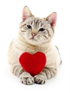 One of the best Valentine's Day gifts for cats is your undivided attention.