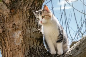 Cats get stuck in trees when they climb too high to jump down.