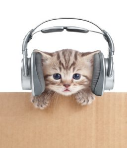 Do cats like music? This one seems to be enjoying what's playing into his headphones.